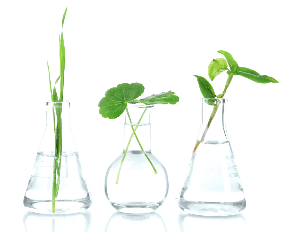 Plant extracts Solutions Cosmeceuticals skin care